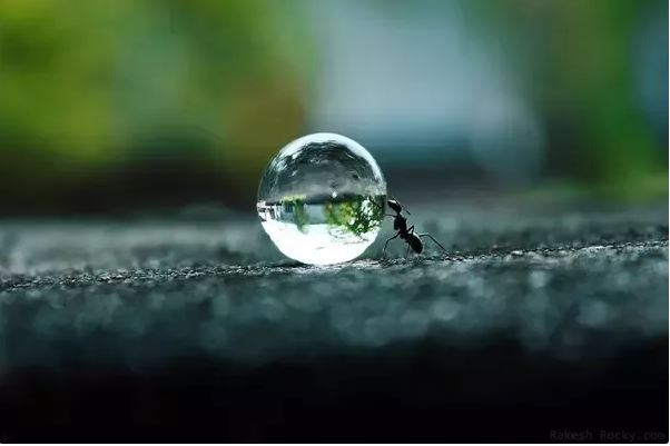 Ants featured image